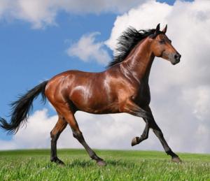 runninghorse